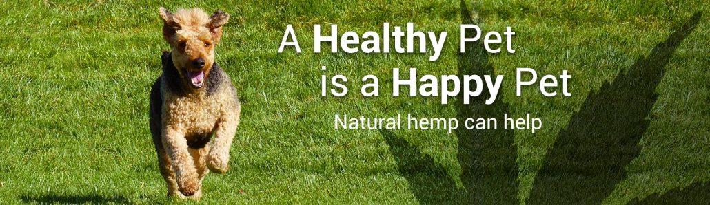 Image result for happy hemp dog