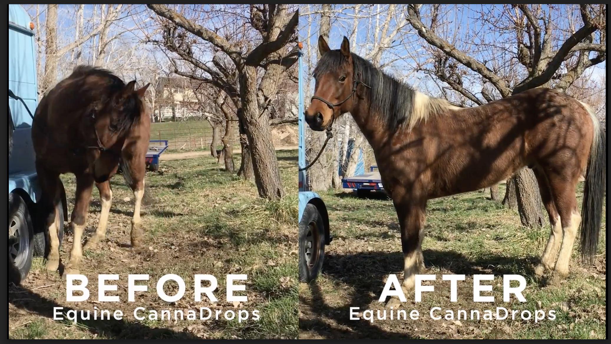 Equine CannaDrops horse hemp