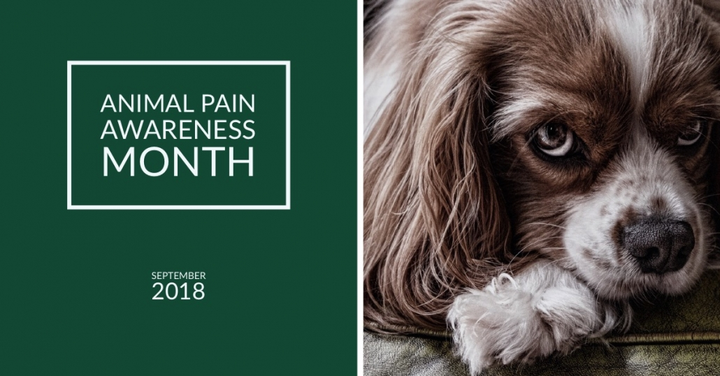 Animal Pain Awareness Month Blog Photo