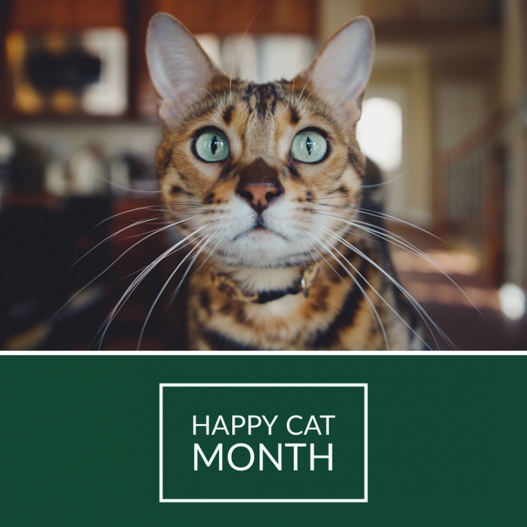 Healthy Hemp Pet Company Happy Cat Month