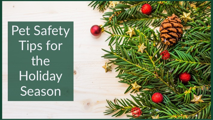 Pet Safety Tips for the Holiday Season 12202018