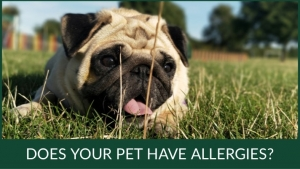 Does Your Pet Have Allergies blog post