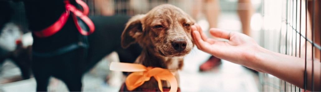 Find a Store - Healthy Hemp Pet Company